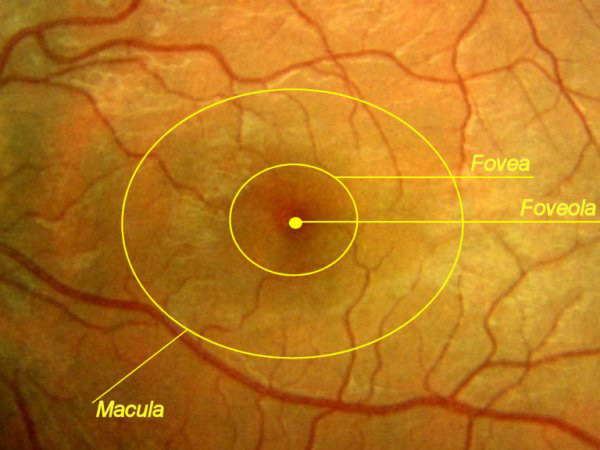 Macula - Dr. Carlo Benedetti 87687c32fe